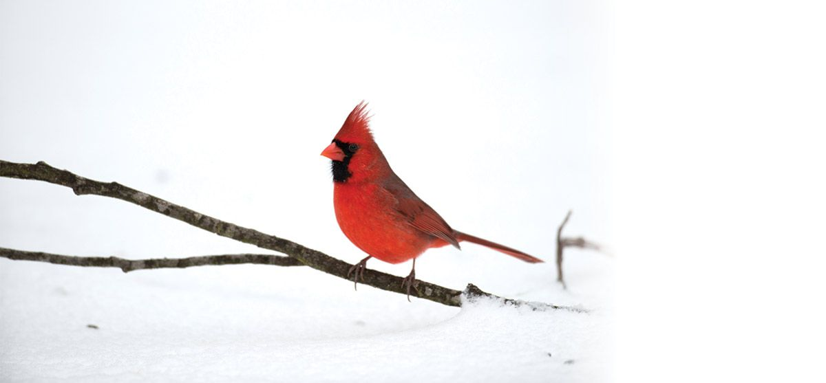 bird-seed-feeder-feature