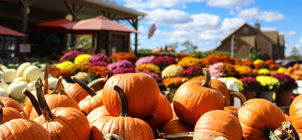 fall-basket-bucks-feature