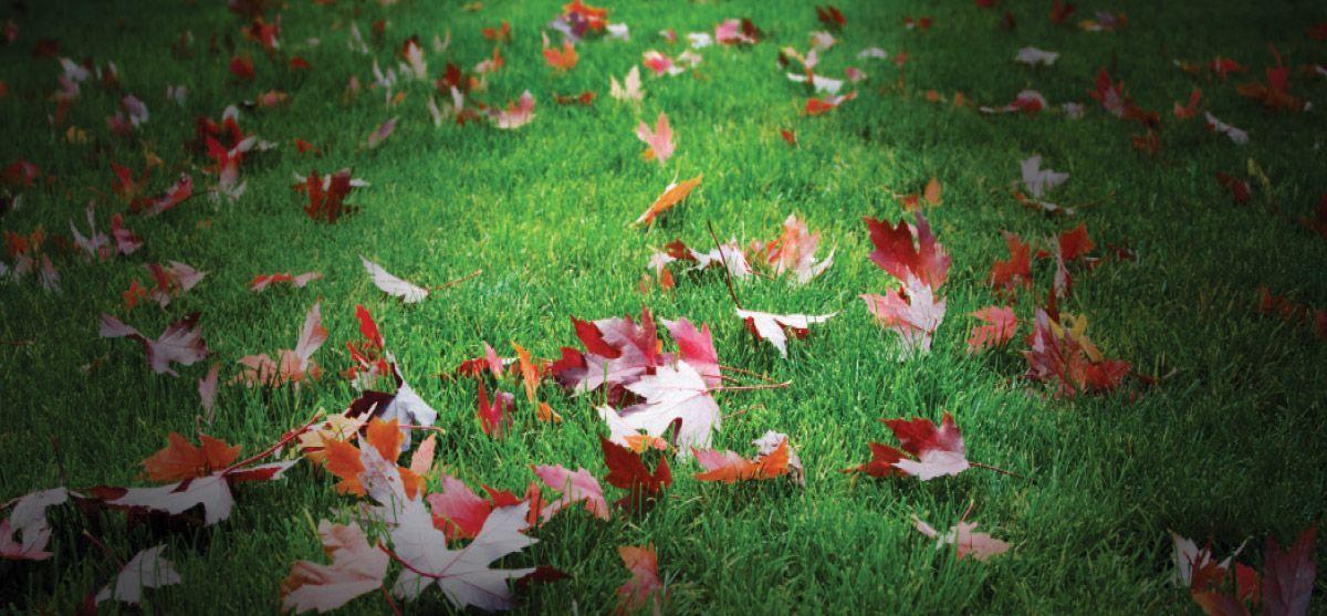 grass-leaves-bg