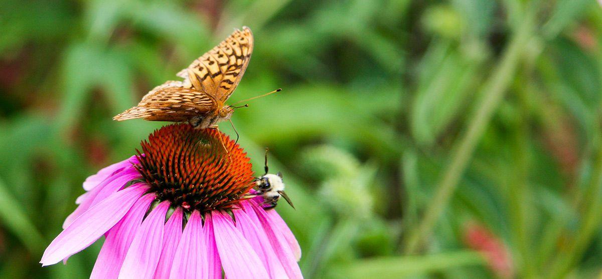 pollinator-week-feature