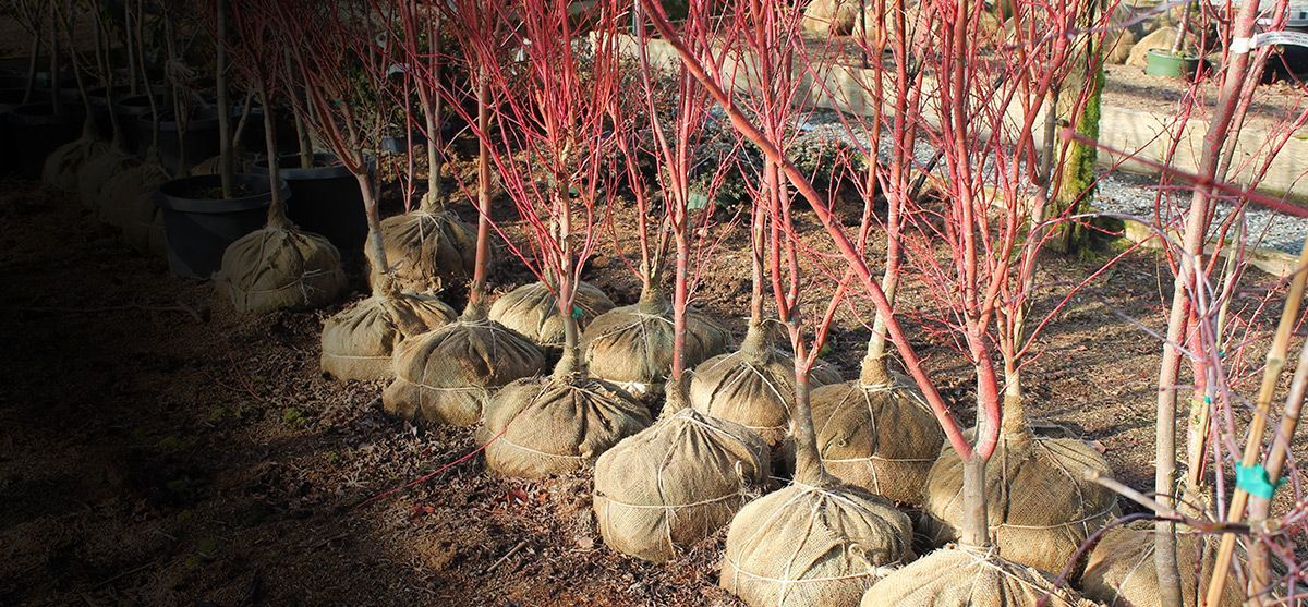 tree-planting-2016